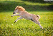 IM FLYING :):):)