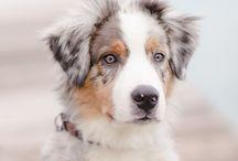 Races de chien / Toutes les races de chien sont sur toutoupourlechien.com