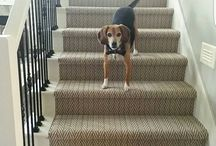 Doggies and Rugs / Precious Pets and CArpets