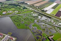 Wetland inspiration