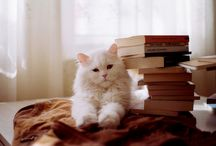 Cats&books / Cats also love to read!