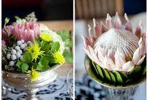 Labola: Pastel Protea Prettiness