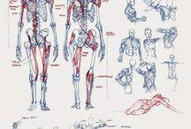 Drawing anathomy