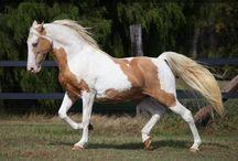 Animals: Horses / by Adam Lang
