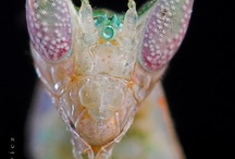 Insect-makro-micro / insect / by Elisa