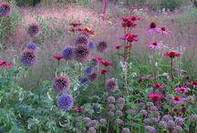 Piet Oudolf's gardens / Gardens designed by Dutch garden designer