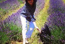 Love Lavender / I love lavender - in the garden, in a pot on my patio, culinary for cooking, drieds for decorating, linen water - I even sell it on Etsy - but nothing - nothing beats the fields of Provence - my Happy Place !!!