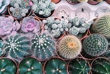 GARDEN / Ideas and tips for gardens and gardening. Plants and flowers. Succulents, ferns, cactus, courtyard, green, style, environment, grow, landscaping, herbs.