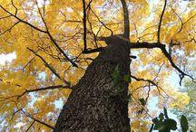 #Árbore, fonte de vida / Un árbol é a imaxe da biblioteca. A folla dun Carballo! Compartamos a beleza da natureza xuntos!