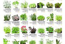 plantas y huerta