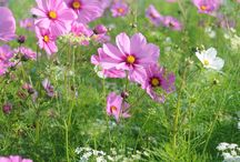 Late season flowers at New leaf Organics / flowers that are blooming from august up until first frost in October