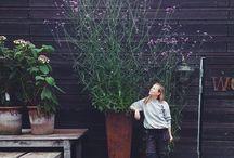 растения декор