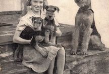 Terrier / Ukochana rasa