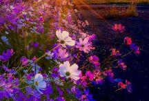 Virágos rét fields - Virágoskert