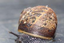 CPM's Photos of Snails & Shells