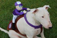 Bull Terrier :)