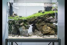 aquascape idea