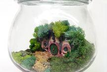 Gardens: Miniature / The art of creating miniature gardens.
