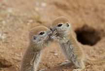 Cute animals cheer a girl up! / animals