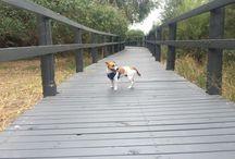 Perth Dog Walks