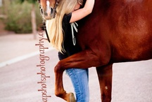 teaching horses things