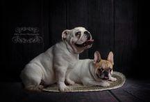 Eden Grove Photography - Pets