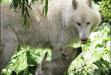 Animals I Love / by Philip & Jessica Miranda