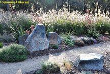 Native grasses garden
