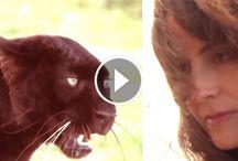 [Animals / Pets]