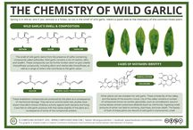 The Chemistry of Foraged Foods