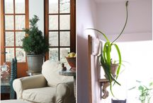 Houseplants and Gardening Indoors / Houseplant design ideas to get you inspired.