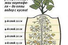 Современное садоводство