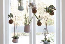 Windows & Plants