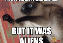 <3 Aliens & Sheep