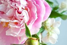 In Love With Peonies / by Nancy Scott Thomas
