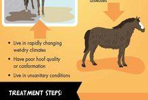 hevosten hoitoa