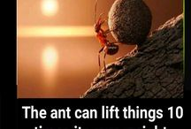 Ants Interesting Facts