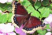 Butterflies, Dragonflies, Bees...