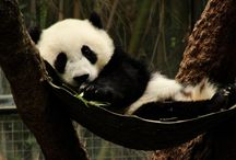Too Cute! / by Cindy Sugai