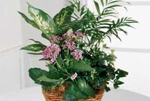 Plants / by Coady Florist