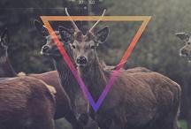 oh my deer  / Fawn / Deer cerf / faon Bêtes à cornes / by Oledie Hanouna