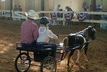 DRIVING MINIATURE HORSES
