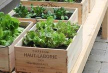 Green garden planters