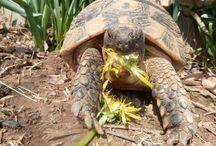 Maison tortues