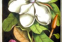 Botanicals / by Brenda Accornero