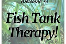 Fish Tank Therapy