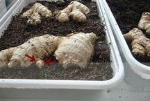 gardening/moestuintje