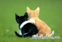 favorite animals