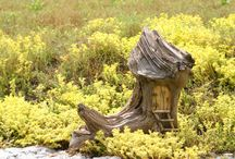 Fairy Houses / The fairies in the garden need a place to live too!