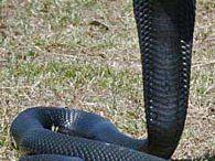snakes / by Nancy Raley